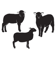 gard electric pentru oi si pentru animale domestice si salbatice lemenager franta